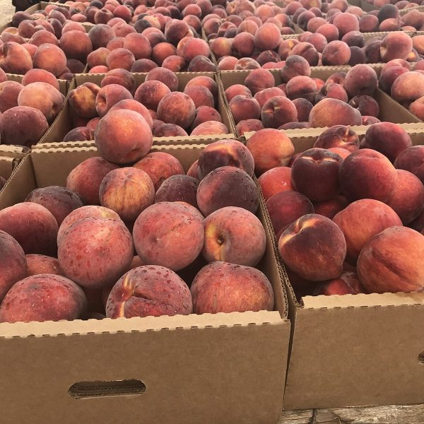 Brown's Farm Fresh Georgia Peaches are Coming to Tampa