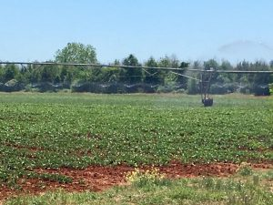 How to maintain the farm fields throughout the season